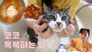 코코 목욕시키는날, 일단 먹자! (노브랜드 깐풍기/토마…