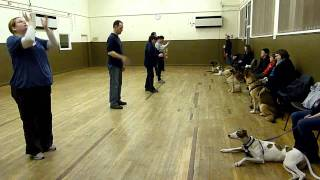 Adolescent Dogs - Footage From Dog Training Classes. Guildford, Surrey.
