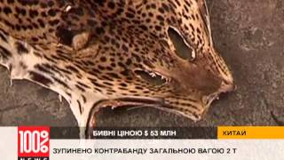 Бивни слонов, рога носорогов и шкуры леопардов - контрабанда на $ 5 300 000