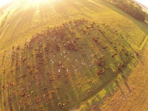 Regenerative Ranching with High Density Rotational Grazing
