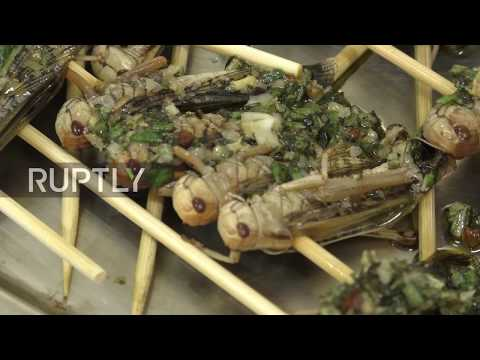 Creepy crawly dining - patrons tuck into worms, grasshoppers and edible dirt at Zurich restaurant