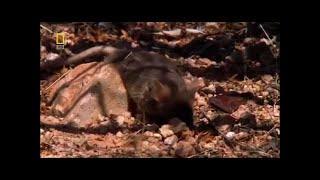 El mejor Documental - Дикая Природа Таиланда (National Geographic Документальный фильм)