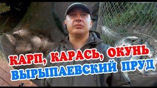 Видео рыбалка на карпа.  2016 CarpFishing #3(Видео рыбалка, ловим карася, карпа, окуня на платном пруду в России в Республике Марий Эл. Пруд называется..., 2016-07-01T07:21:50.000Z)