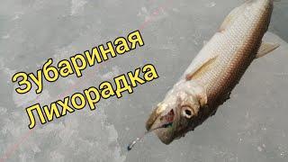 Зубариная лихорадка Рыбалка на корюшку Сахалинская рыбалка Sakhalin fishing
