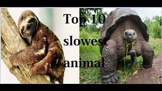 Top 10 Slowest Animals in the World.