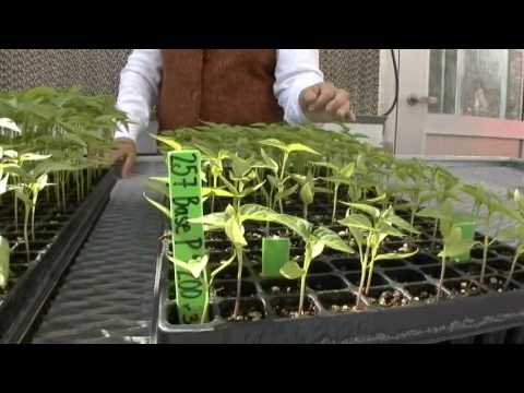 Vermicompost a Living Soil Amendment