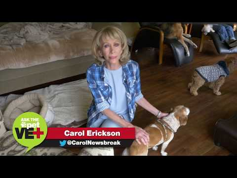Monkey's House Dog Hospice - Ask The Pet Vet with Carol Erickson Part 1 of 6