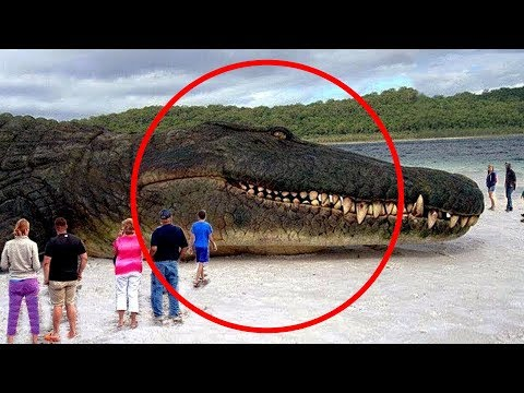 Top 10 Biggest Animals In The World You Need To See