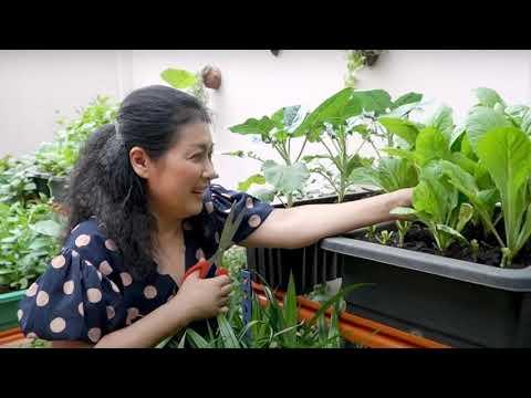 Kệ trồng rau lắp ghép