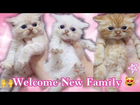KELUARGA BARU LUCU ? MAKIN BANYAK KUCINGKU – NEW C CAT FAMILY , WELCOME 'CCB' – VIDEO KUCING LUCU