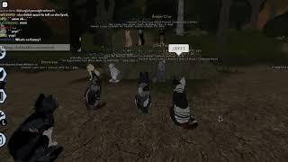 Warrior Cats! WC, TC, RC gathering!