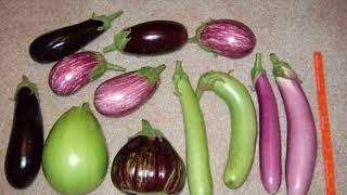 Health Benefits Of Eggplant - Side Effects Of Eggplant