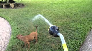 R U B Y Vs The Water Hose!