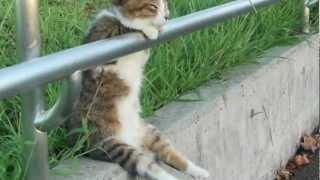 「お座り 猫ちゃん」の名前は、「ののちゃん」でした。 以前からブログで紹介されていることを、ののちゃんのファンの方から教えていただき...
