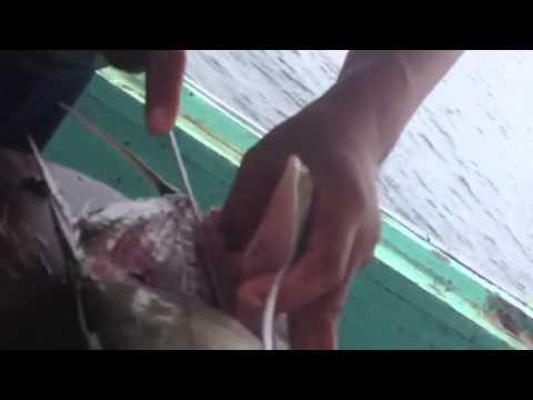 เมนูปลาสุดเด็ด by ไต๋นนท์