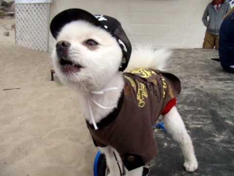 Bobby Gorgeous At Huntington Beach Surf Dog Doggie Fashion Show