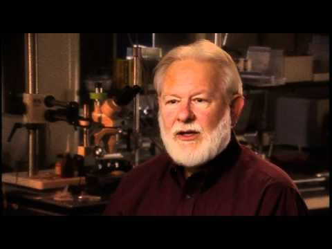 David Nichols: DMT is a unique psychedelic because it occurs naturally