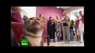 День бездомных животных в музее кошек Петербурга