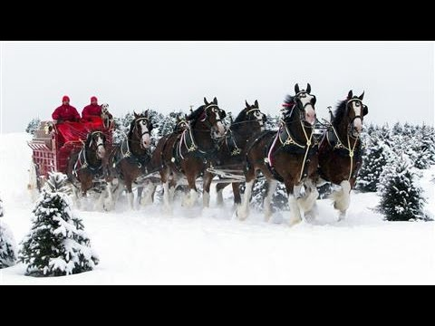 Image Makeover for Budweiser's Clydesdales?