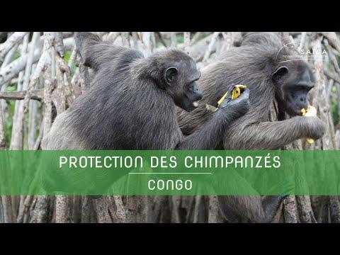 SAÏGA : présentation de HELP CONGO fondée par Aliette JAMART en 1989