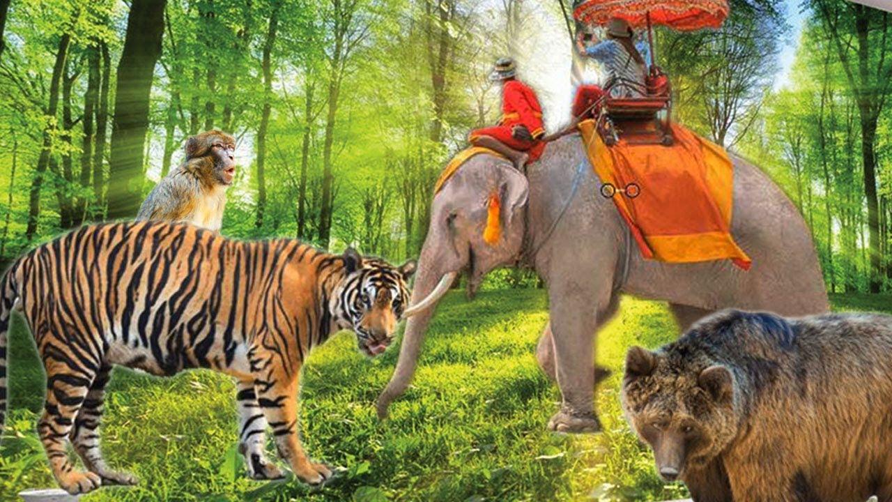 Bài 6: Dạy bé các hành động hàng ngày và tên con vật