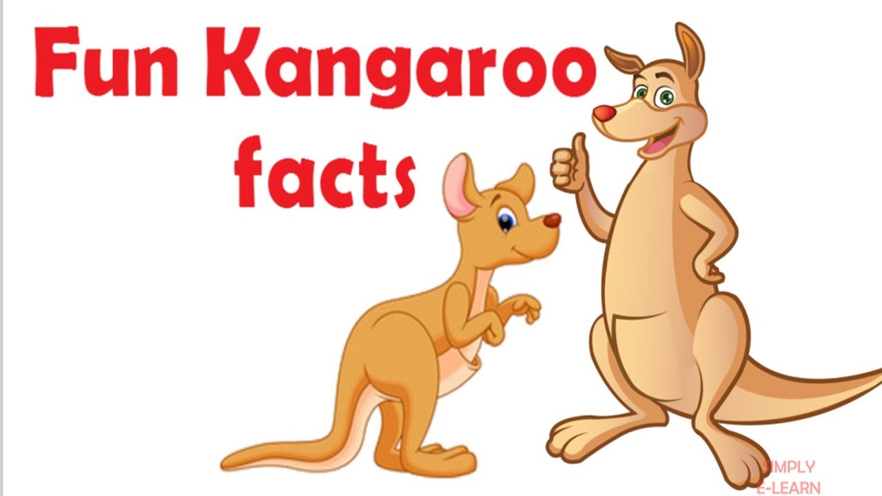 Facts About Kangaroo For Kids