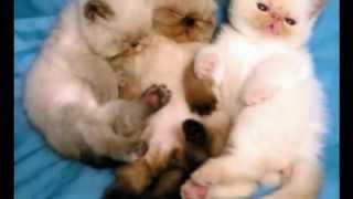 Most beautiful cats Самые красивые котики