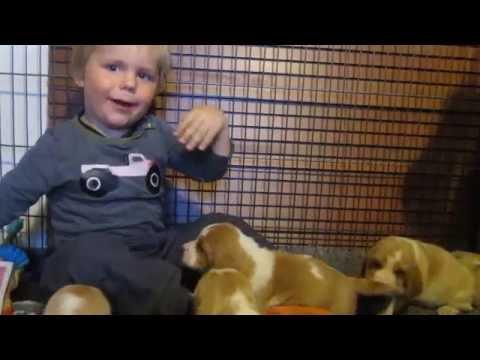 Basset hound pups & a kid :D