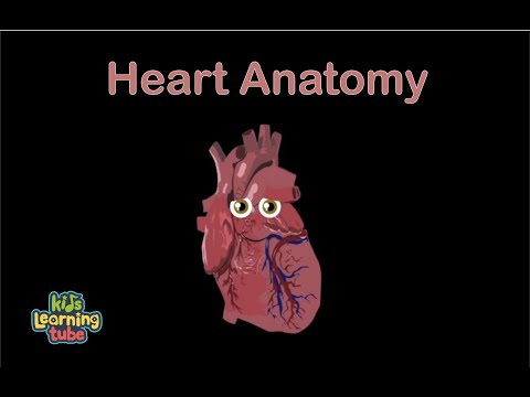 Heart Song for Kids/The Human Body for Kids/Learn about the Human Body for Children