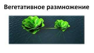 12. Вегетативное размножение (6 класс) - биология, подготовка к ЕГЭ и ОГЭ 2019