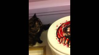cat afraid of the potty monster