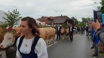Alpaufzug Emmentalisches Schwingfest Zollbrück