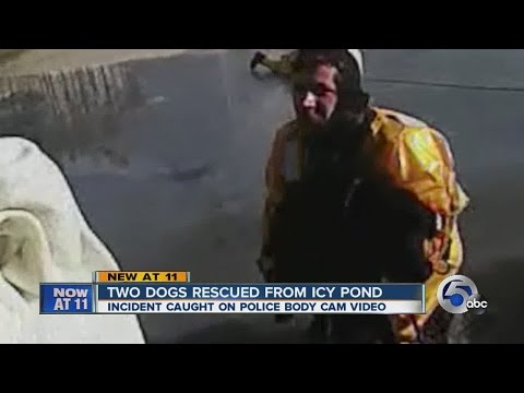 Two dogs rescued from icy pond in Bath Township