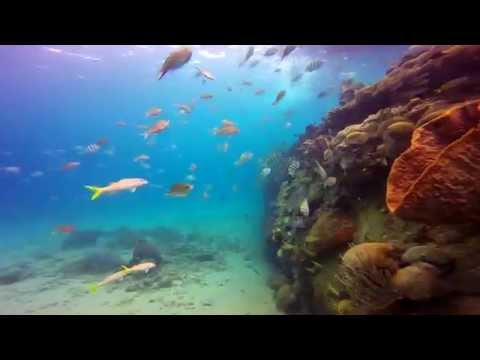 Wreck Diving Video - Carlisle Bay Barbados