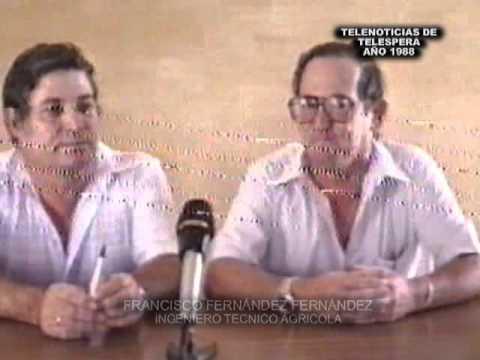 Espera, verano 1988. Telenoticias de Telespera. Tala de arboles que perjudican