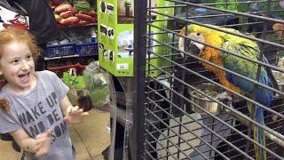 VLOG Заказываем игуана в зоомагазине Iguanas
