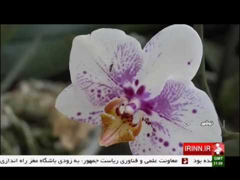 Iran NowShahr county, Orkideh flowers greenhouse گلخانه پرورش اركيده شهرستان نوشهر ايران