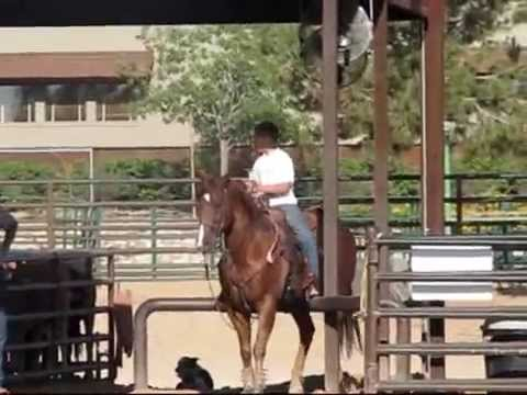 Team Roping Horse For Sale by www. jakebarneropehorses.com ...