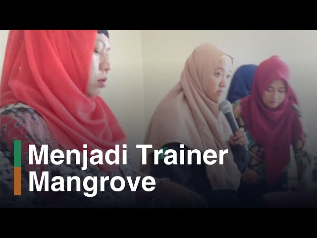 Trainer Mangrove, Trainer Mangrove Muda