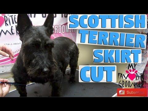 Scottish Terrier Skirt Cut