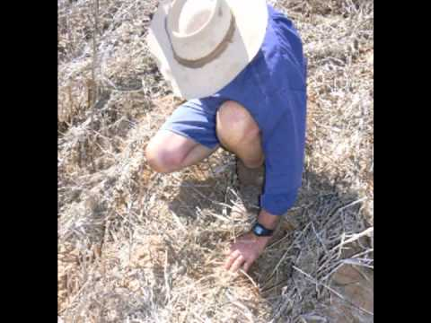 Over the Fence: Cover crop ensures soil water - Jun 2011