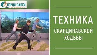 ТЕХНИКА СКАНДИНАВСКОЙ ХОДЬБЫ Видео. Как правильно ходить с палками.
