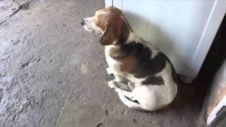 Cachorro Vira Lata De Pequeno Porte Treinado E Engraçado Dormindo Sentado