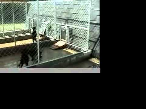 Puppy Training Using A Gun Dog House Door Youtube