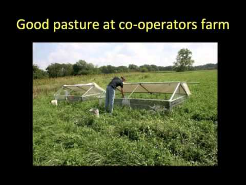A Novel Nutritional Approach to Rearing Organic Pastured Broiler Chickens
