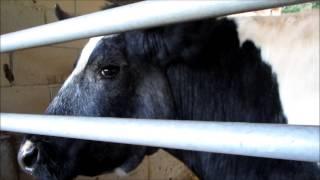 Z kamerą wśród zwierząt Thumbnail