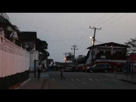 Million BATS flying in Monrovia, Liberia