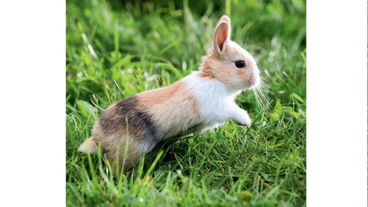 Top 11 des lapins les plus mignons youtube - Photo de lapin mignon ...