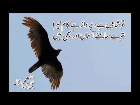Allama Iqbal Famous Poetry In Urdu With Pictures