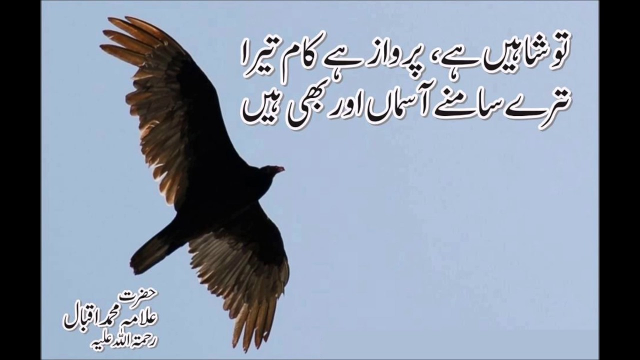 Famous Quotes Of Allama Iqbal In English About Education: Allama Iqbal Famous Poetry In Urdu With Pictures